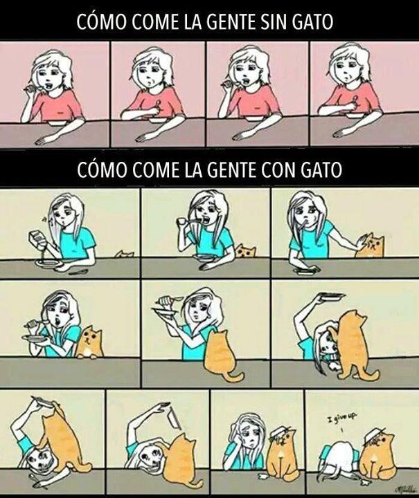 La vida con un gato