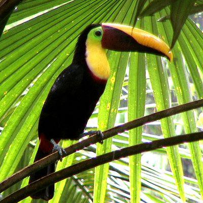 """Auf Costa Rica im """"Regenwald der Österreicher"""" Bild: Verein Regenwald der Österreicher"""
