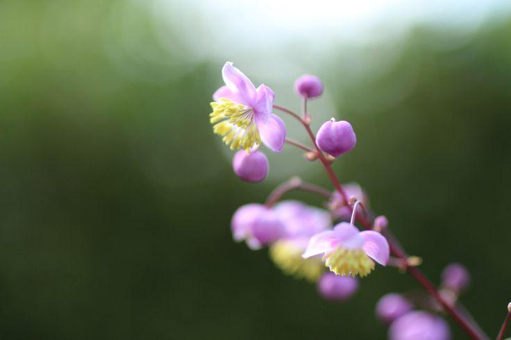 faire livrer des bouquets de fleurs 005 #fleurs #bouquet