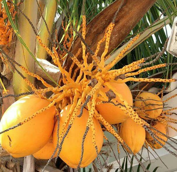 54 Best Fruits And Vegetables Of Trinidad & Tobago Images