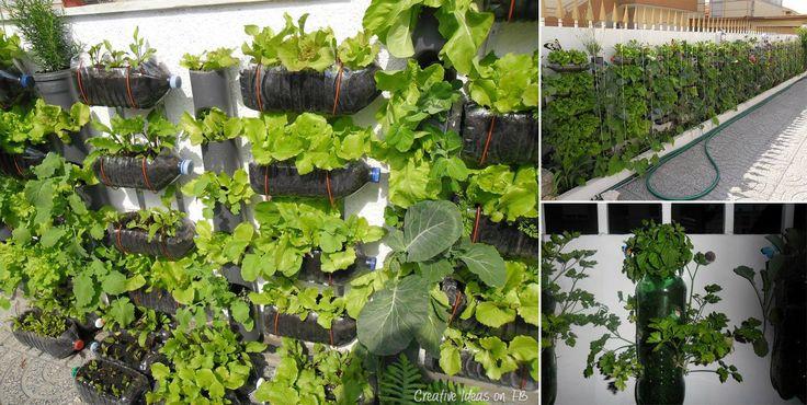 flaschent pfe zum pflanzen garten pinterest g rten flasche und wiederverwertete flaschen. Black Bedroom Furniture Sets. Home Design Ideas