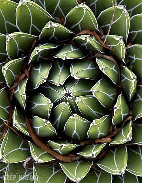 Pozsgás növények - Szép Házak Online