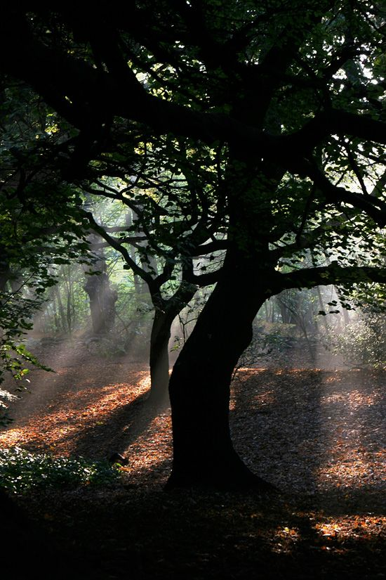 Hampstead Heath - London