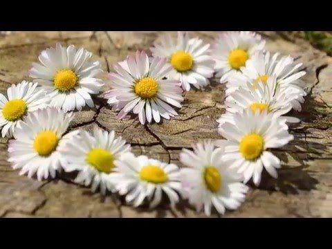 Ho'oponopono (Meditación Español) por Vivi Cervera - YouTube