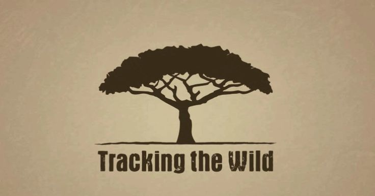 Meet Tracking the Wild: the social tool using crowdsourcing to help Africa's wildlife