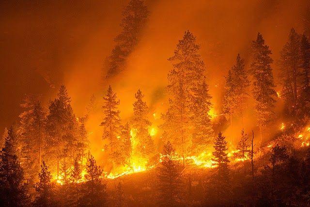 Kebakaran hutan merupakan salah satu penyebab terjadinya global warming - Oleh sebab itu mari kita menjaga dan melestarikan hutan kita