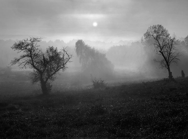 Interesting photographs are found everywhere. I have found it in the orchard just outside my front door in winter,  ordown the road as the sun came up on a foggy summer morning.