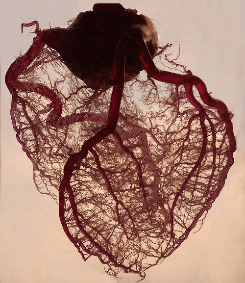 """The human heart stripped of fat and muscle, with just the angel veins exposed.""- morbidly awesome!"