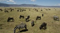4 Day Ngorongoro Crater, Serengeti & Lake Manyara Safari. This 4 day / 3 night Tanzanian safari explores the world renowned north east corner of Tanzania. This area boasts the Serengeti Game Reserve, Ngorongoro and Lake Manyara. Although a short safari itinerary, it does cover some good distance offers very contrasting areas. The safari departs from and returns to Arusha.