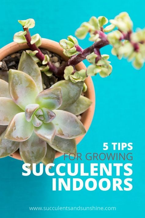 5 tips for growing #succulents indoors - A quick and easy guide from the experts on keeping your succulents alive and thriving inside the home or workplace.