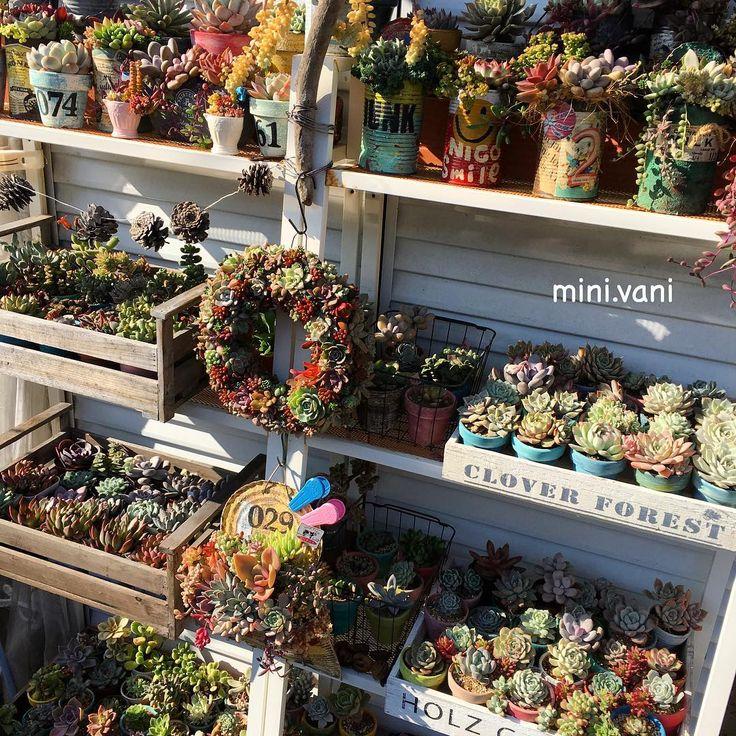 . 今日は晴れ⤴︎⤴︎⤴︎☀️✨ #minivani #多肉 #多肉植物 #リメ缶 #リメ鉢 #多肉棚 #リース #ダイソー #セリア #succulents…