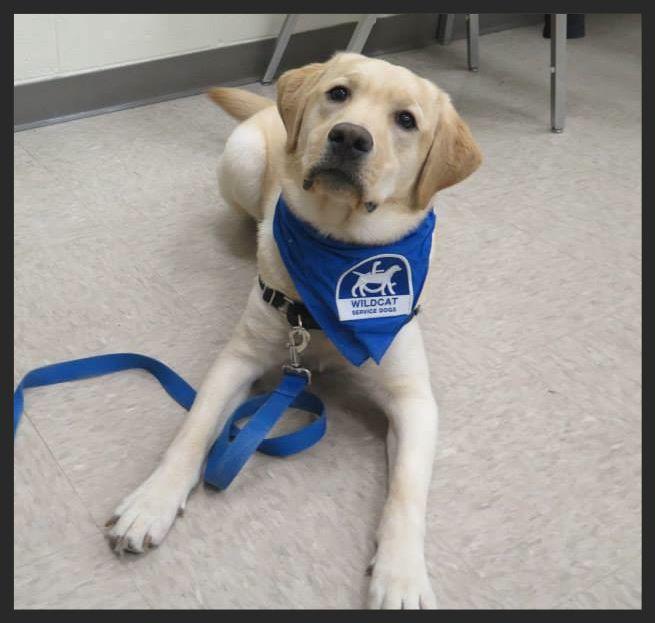 University Of Kentucky Wildcat Service Dogs