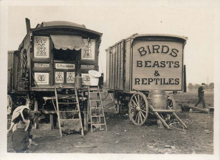 Circus: #Circus Caravans, 1940-1950s.