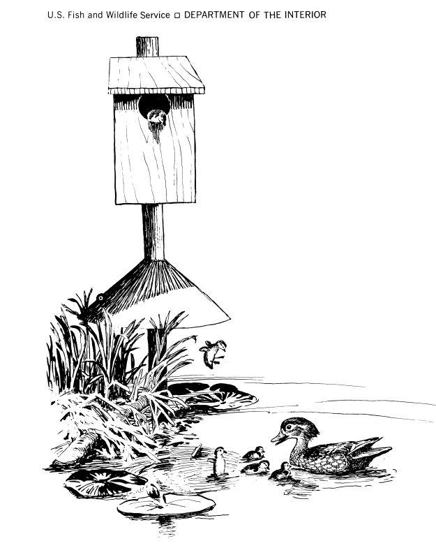 7 best wood duck boxes images on pinterest