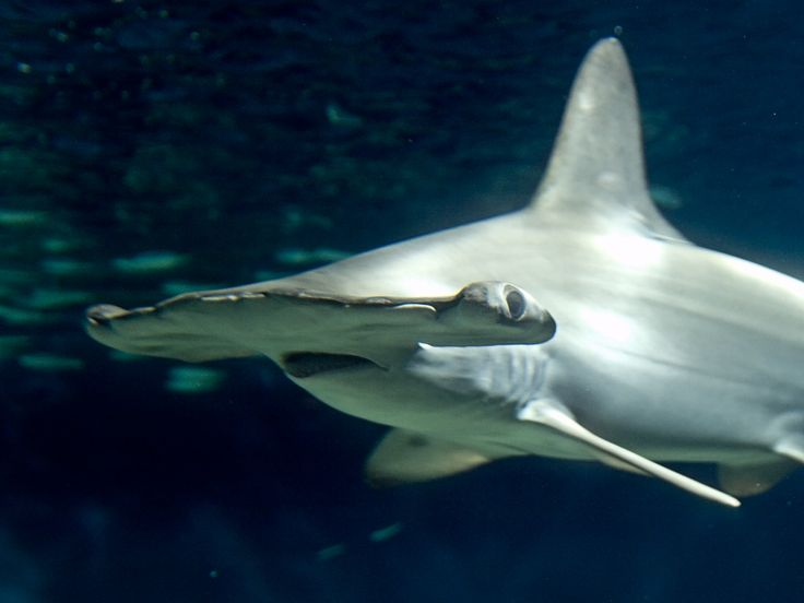 Environmentalists Call for Severe Punishments for Shark Finning in Costa Rica