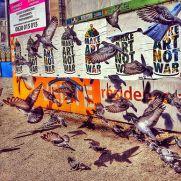 pigeons-make-art-not-war