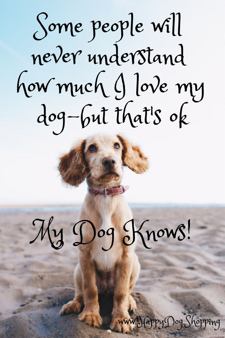 Pin On Hunde Quotes