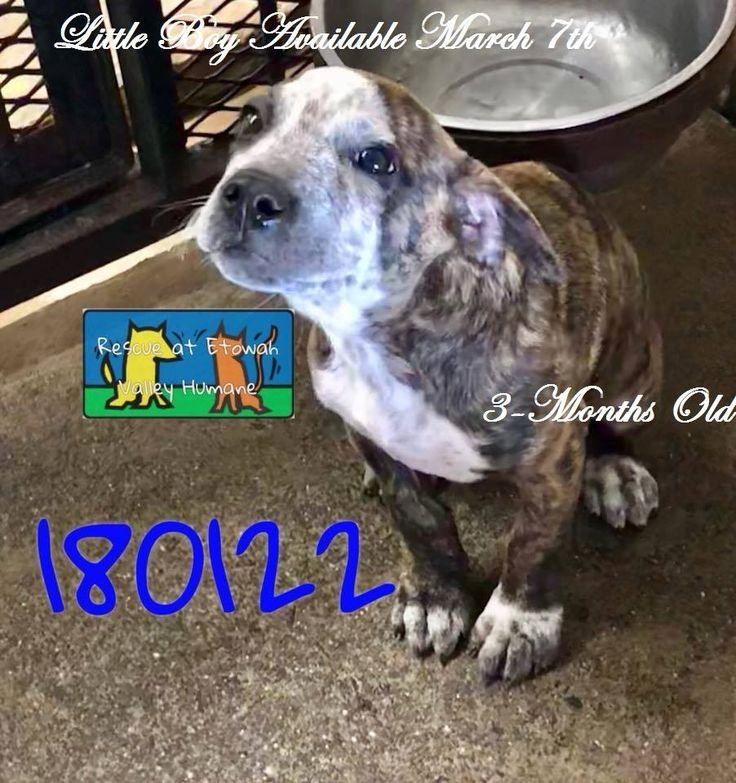 3 6 18 Unknown Fate Etowah Valley Humane Cartersville Ga Vanished Off Fb Before Release Date Little Boy Id 180122 Male 3 Months Mixed Breedm 10 1801