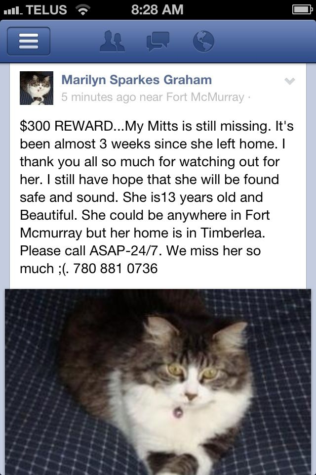 Marilyn Sparkes GrahamFort Mcmurray lost Cats & Dogs June 14 near Fort McMurray, Alberta