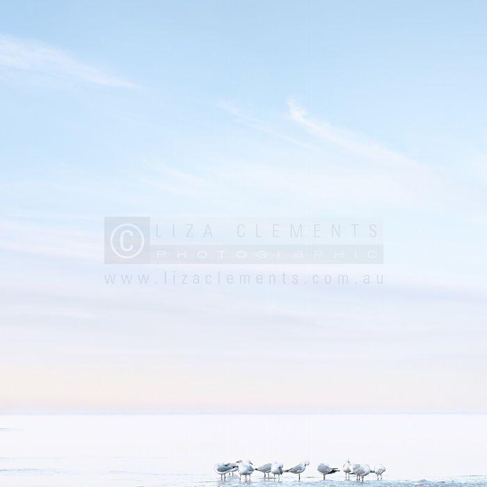 Seagulls at Beaumaris, LE12+1AP
