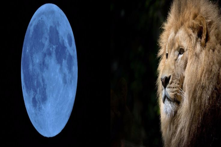 moon and lion