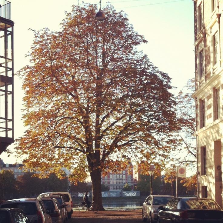 #østerbro #copenhagen