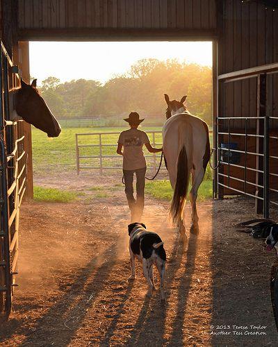 Man, horse, dog. Evening stroll.  www.rx4nails.com