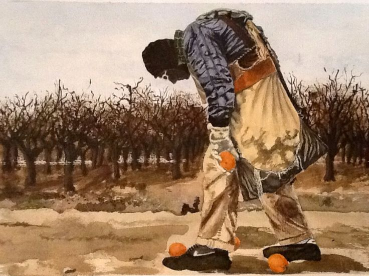Californian orange picker. Watercolour.