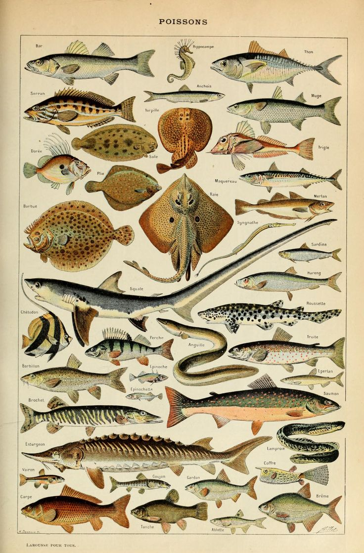 Le Larousse pour tous : Poissons.  I just found this print at a flea market and i'm framing it for my wall .