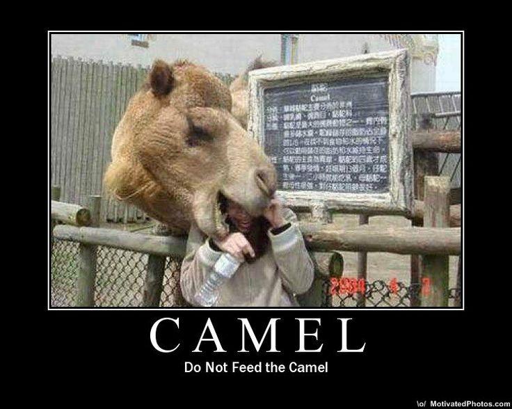 jokes two assholes on a camel jpg 1152x768