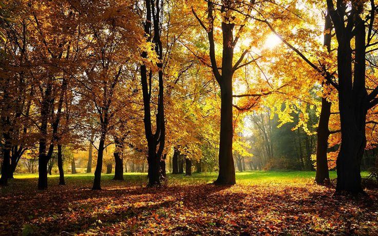 Goodby-Autumn-1600x2560.jpg (2560×1600) http://hdwyn.com/wallpaper/autumn_trees_light_hd-wallpaper-88475.jpg http://www.wallpapersdesign.net/wallpapers/2012/09/Goodby-Autumn-1600x2560.jpg http://www.widewallpapers.net/mod/nature/forest/1600x900/forest-wallpaper-1600x900-008.jpg