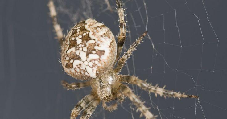Qué utilizan los exterminadores para matar a las arañas. Las arañas son arácnidos comunes que se encuentran en casi todas las partes en el planeta, con algunas especies que comúnmente se encuentran en el interior de casas, garajes, patios y jardines. Por lo general, las arañas no causan mucho daño, especialmente cuando se comparan con las termitas y a las hormigas; sin embargo, aún pueden infiltrarse en ...