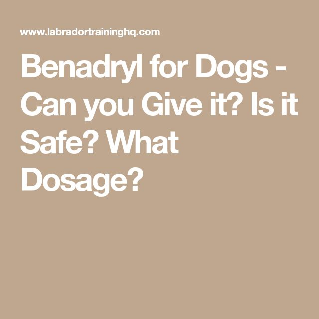 How Often Can You Give A Dog Antihistamines