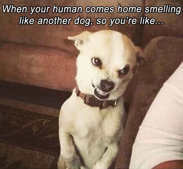 Funny Pictures Of The Day 35 Pics