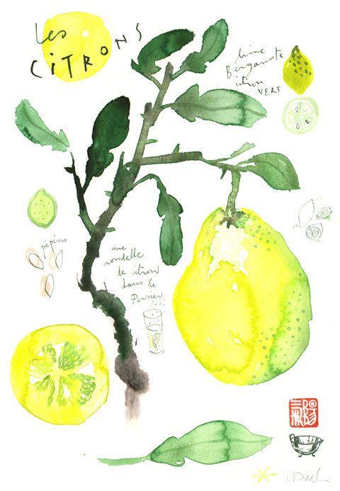 Lemons Original watercolor painting Food art Kitchen decor Fruit Citrus Illustration Botanical french Yellow Lime drawing | Pinterest | Watercolor, Lemon and O…