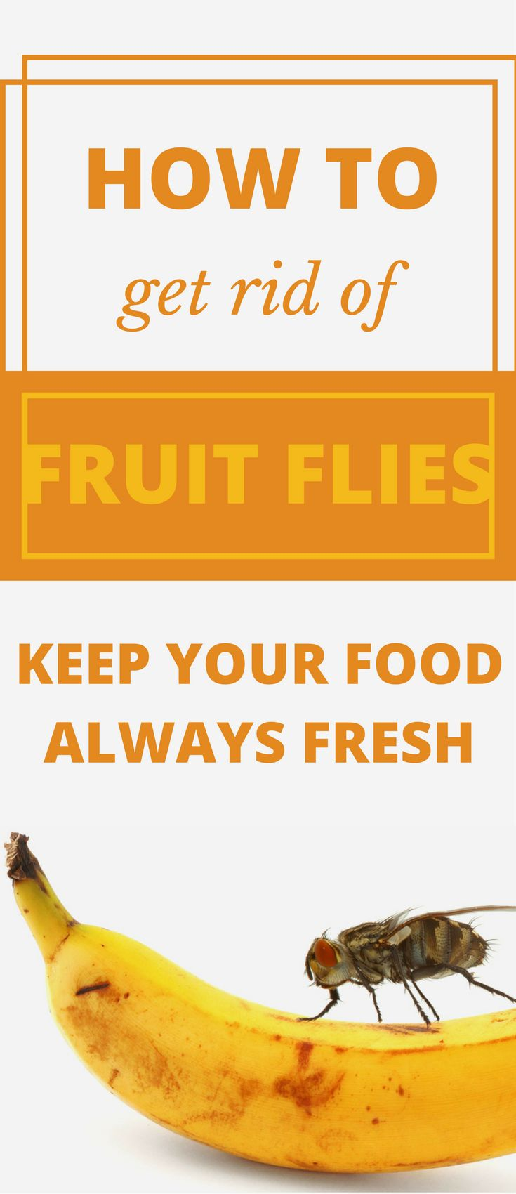 Fruit flies occur regardless of the season or period of the year. Here are some ways on how to get rid of fruit flies, the most unpleasant insects.