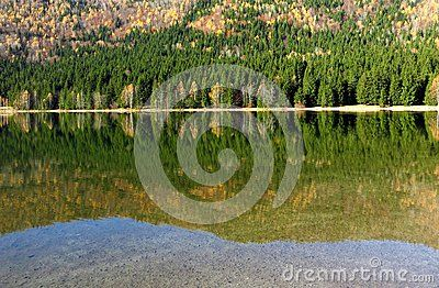 Reflation in the water of the forest at lake Santa Ana in Romania with the autumn colors and clear water refraction