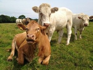 Eat grass-fed meat - one of the best ways to prevent disease, improve brain function & lose weight!  www.redmeatmarket.com