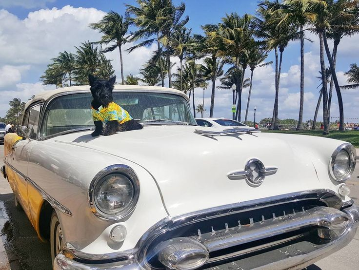 @CraftCafeSobe is located inside the Avalon Hotel on South Beach. Parked right outside? This pawsome old-school Oldsmobile.  Totally my style don't ya think?   Make sure to catch the rest of these supa cool photos on the blog: www.HamiinMiami.com  #HamiInMiami #SouthBeach #AvalonHotel
