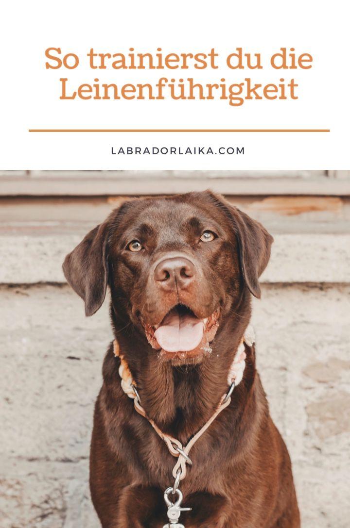 Leinenfuhrigkeit Richtig Trainieren In 2020 Richtig Trainieren Leinenfuhrigkeit Hunde Erziehen