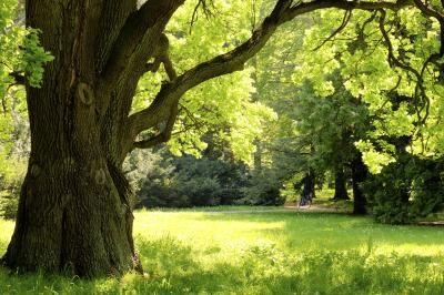 Oak Pollen Allergy Symptoms