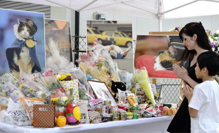Cat stationmaster Tama mourned in Japan, elevated as goddess - Yahoo News