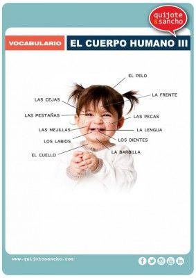 Láminas para trabajar el vocabulario campo semántico el cuerpo humano