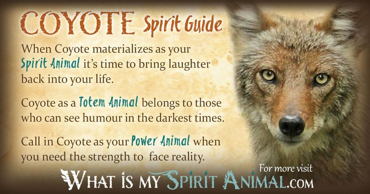 In-depth Coyote Symbolism & Coyote Meanings! Coyote as a Spirit, Totem, & Power Animal. Plus, Coyote in Celtic & Native American Symbols & Coyote Dreams!
