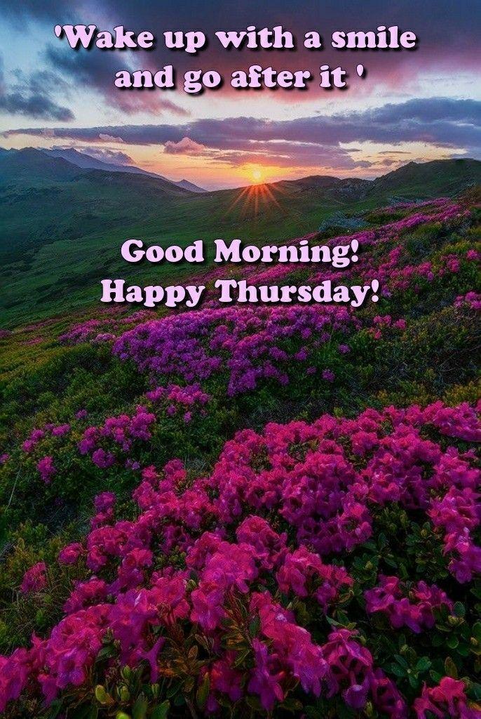 Gm Quotes Mornings Funny Gm Quotes Mornings Funny Good Morning Memes Thursday Humor Morning Humor