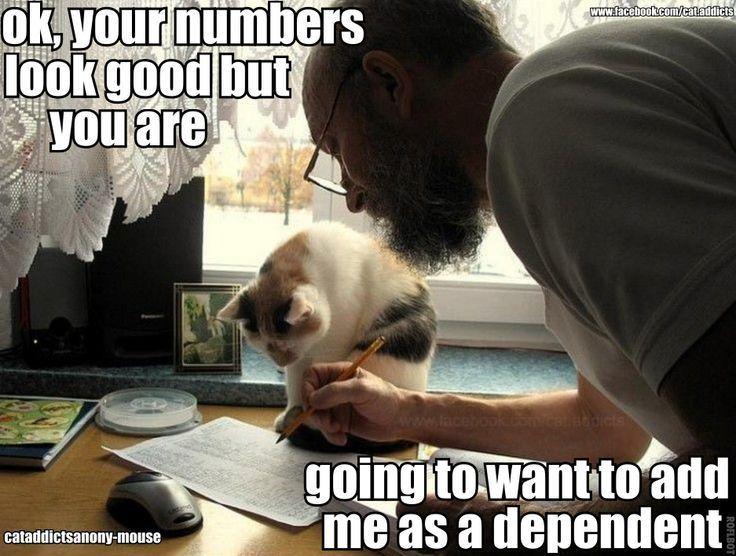 281b6136b59e860acd368b7652725265 69 best tax humor images on pinterest taxes humor, animals
