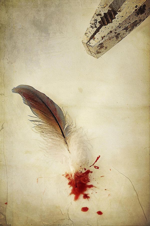 feather with blood...I would consult a vet before doing this for sure, but probably still good to know.
