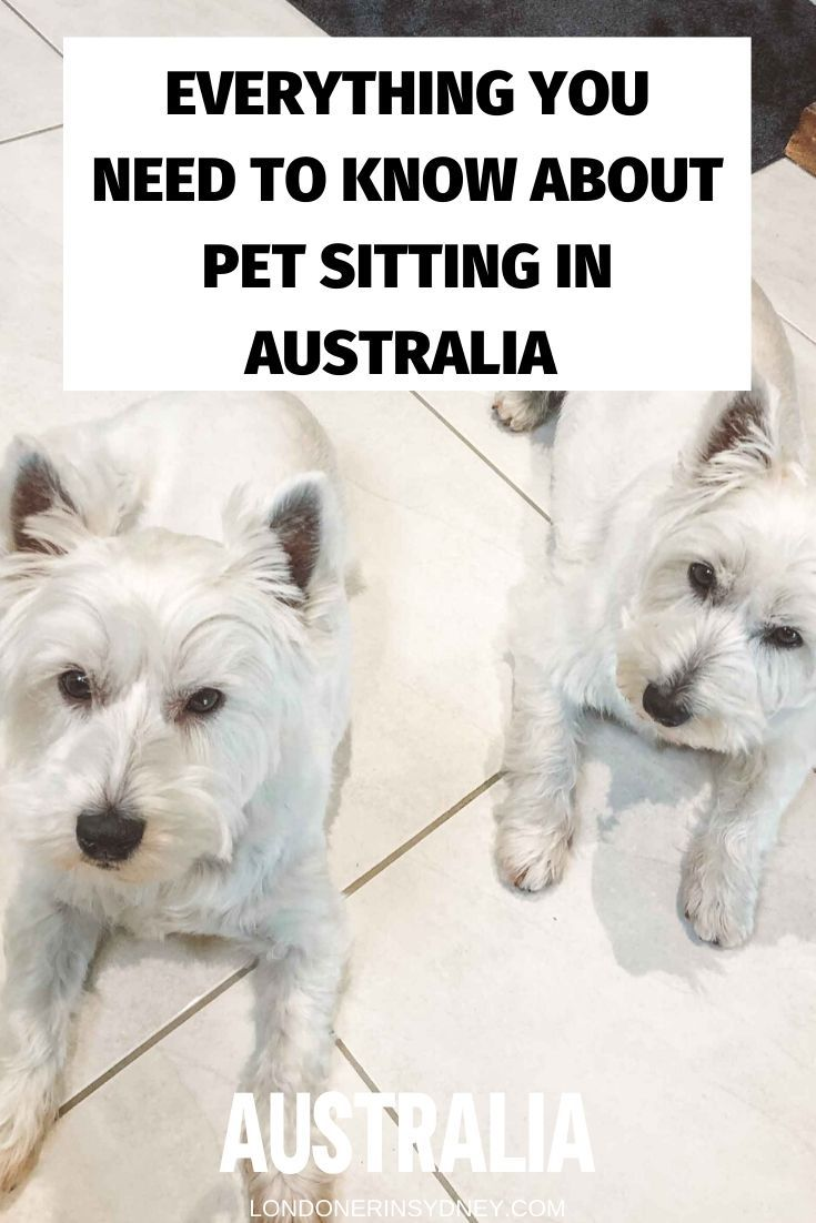 Everything You Need To Know About Aussie House Sitters By A Pet