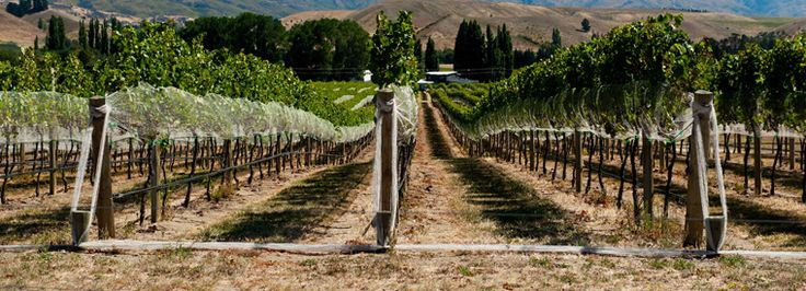 New Zealand Wine Tasting & Winery Tours