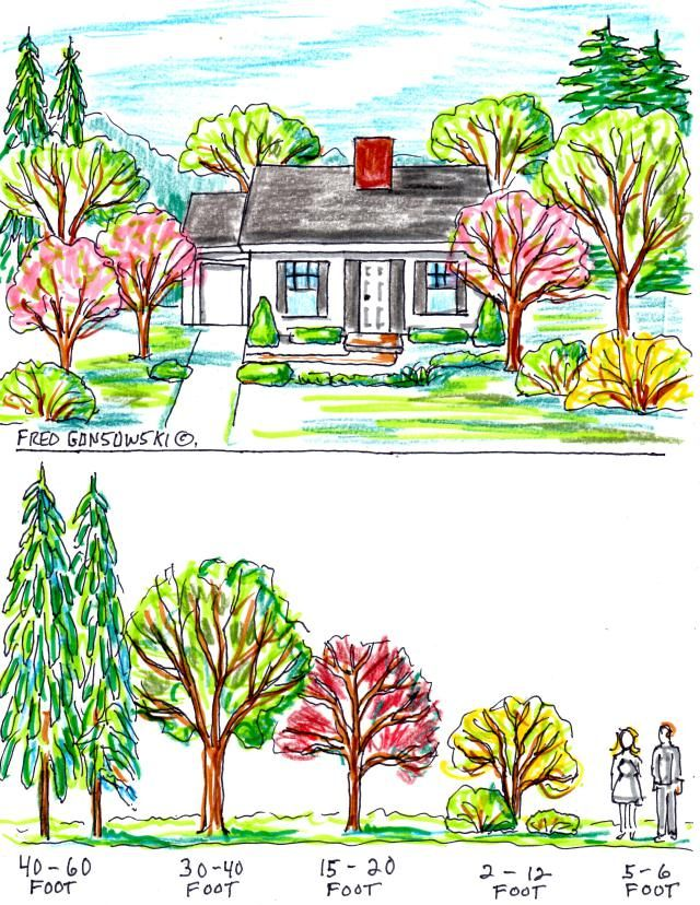 When picking trees to plant on your front lawn, or any spot close to your house (on all sides), select ones that when mature are shorter than, or approximately the same height as your house. As you progress away from your house, outward onto your lawn space, in all directions, think about planting trees that have progressively taller growth habits the further they are planted from your house.